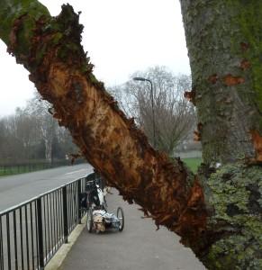 P1010389-dog-damage-branch_crop01.jpg